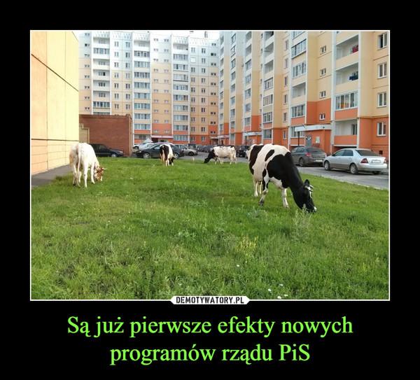 Są już pierwsze efekty nowychprogramów rządu PiS –