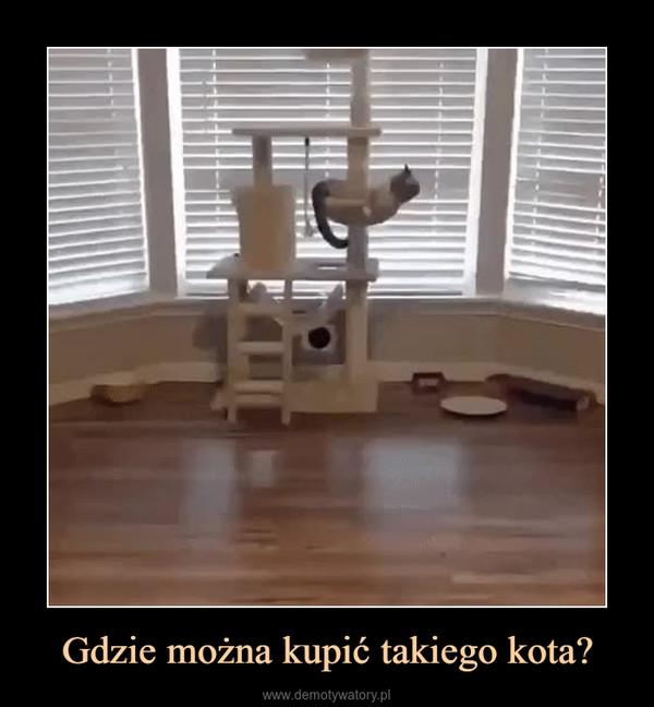 Gdzie można kupić takiego kota? –