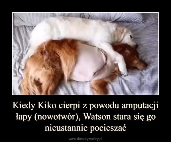 Kiedy Kiko cierpi z powodu amputacji łapy (nowotwór), Watson stara się go nieustannie pocieszać –