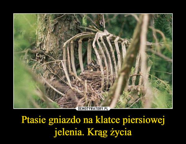 Ptasie gniazdo na klatce piersiowej jelenia. Krąg życia –