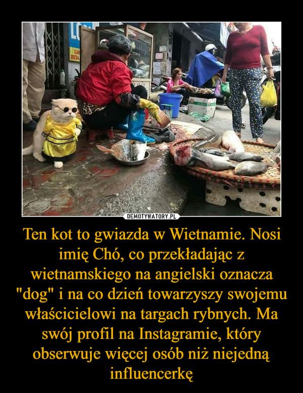 """Ten kot to gwiazda w Wietnamie. Nosi imię Chó, co przekładając z wietnamskiego na angielski oznacza """"dog"""" i na co dzień towarzyszy swojemu właścicielowi na targach rybnych. Ma swój profil na Instagramie, który obserwuje więcej osób niż niejedną influencerkę –"""