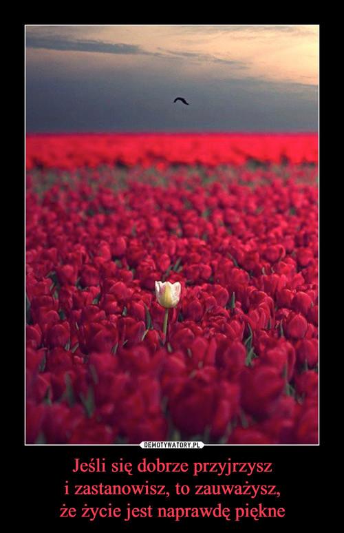 Jeśli się dobrze przyjrzysz i zastanowisz, to zauważysz, że życie jest naprawdę piękne