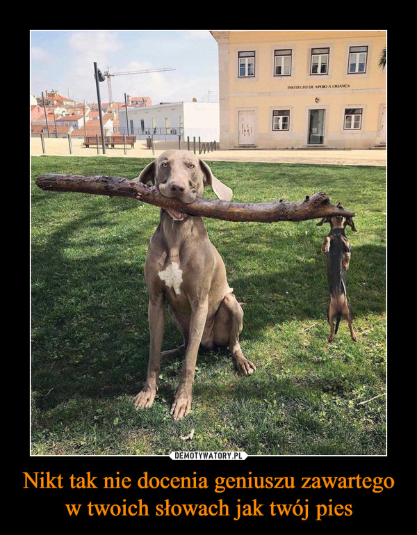 Nikt tak nie docenia geniuszu zawartego w twoich słowach jak twój pies –