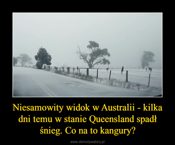 Niesamowity widok w Australii - kilka dni temu w stanie Queensland spadł śnieg. Co na to kangury? –