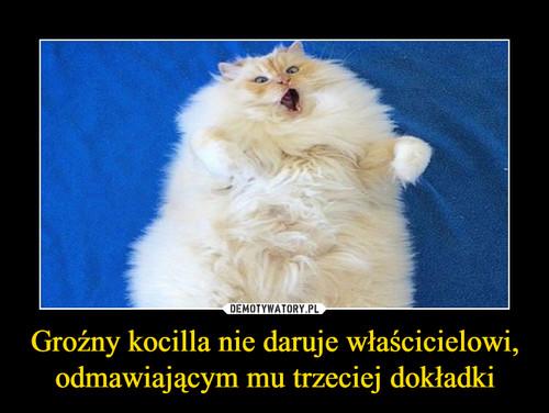 Groźny kocilla nie daruje właścicielowi, odmawiającym mu trzeciej dokładki