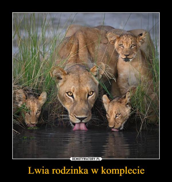 Lwia rodzinka w komplecie –