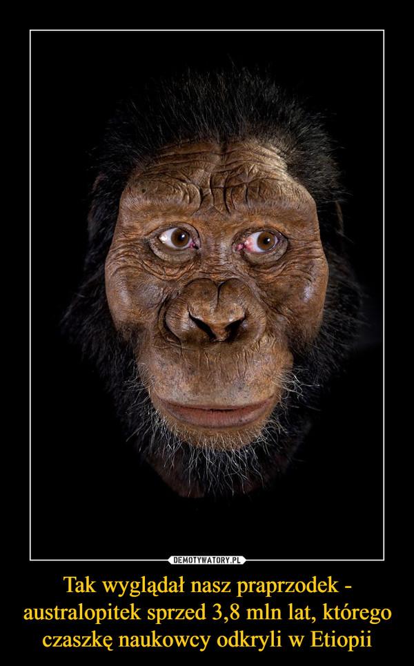 Tak wyglądał nasz praprzodek - australopitek sprzed 3,8 mln lat, którego czaszkę naukowcy odkryli w Etiopii –