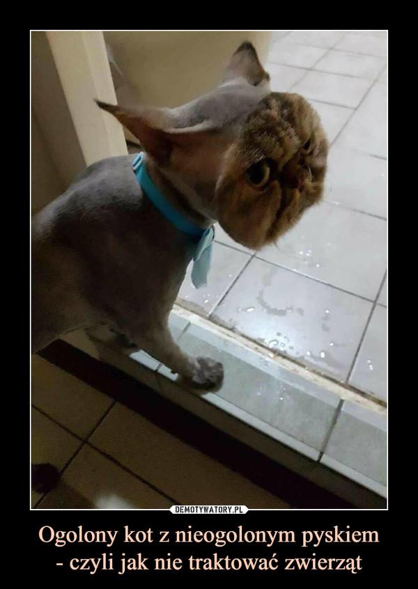 Ogolony kot z nieogolonym pyskiem- czyli jak nie traktować zwierząt –
