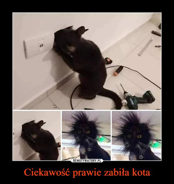 Ciekawość prawie zabiła kota –