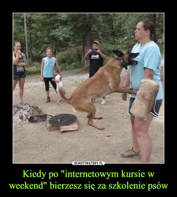 """Kiedy po """"internetowym kursie w weekend"""" bierzesz się za szkolenie psów –"""