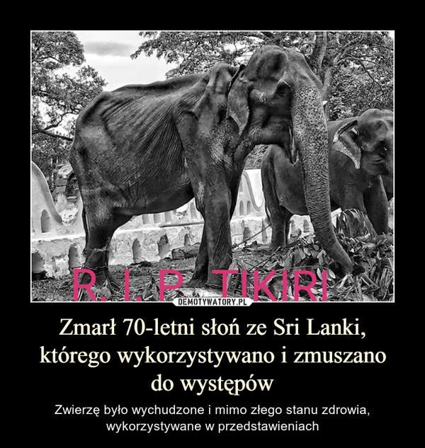 Zmarł 70-letni słoń ze Sri Lanki,którego wykorzystywano i zmuszanodo występów – Zwierzę było wychudzone i mimo złego stanu zdrowia, wykorzystywane w przedstawieniach