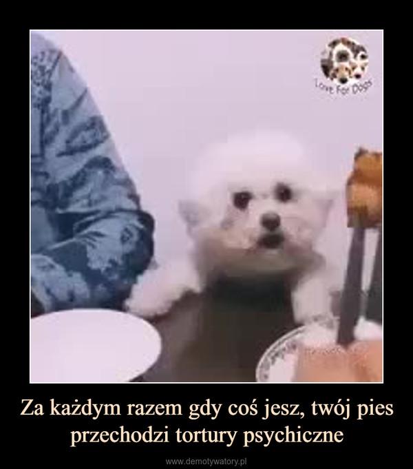 Za każdym razem gdy coś jesz, twój pies przechodzi tortury psychiczne –
