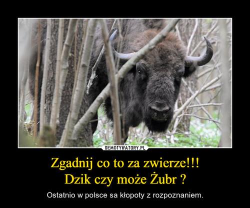 Zgadnij co to za zwierze!!! Dzik czy może Żubr ?