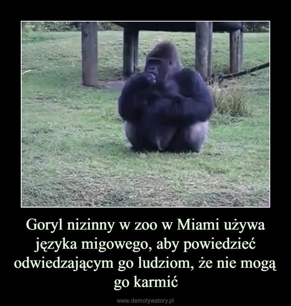 Goryl nizinny w zoo w Miami używa języka migowego, aby powiedzieć odwiedzającym go ludziom, że nie mogą go karmić –