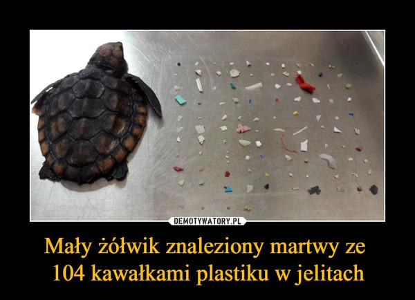 Mały żółwik znaleziony martwy ze 104 kawałkami plastiku w jelitach –
