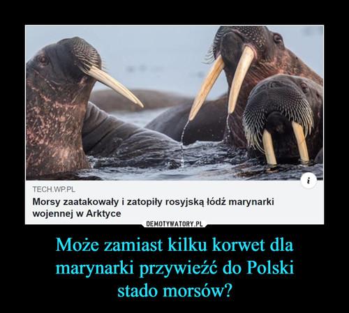 Może zamiast kilku korwet dla marynarki przywieźć do Polski stado morsów?