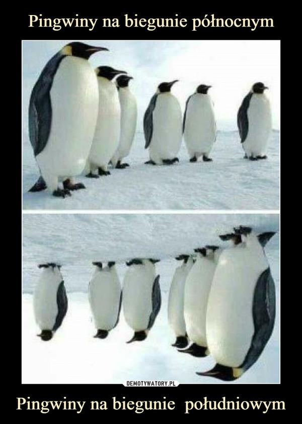 Pingwiny na biegunie  południowym –