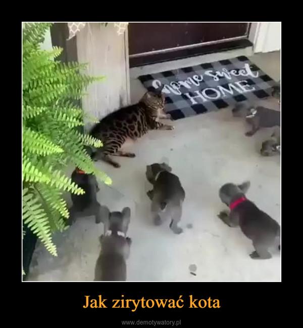 Jak zirytować kota –