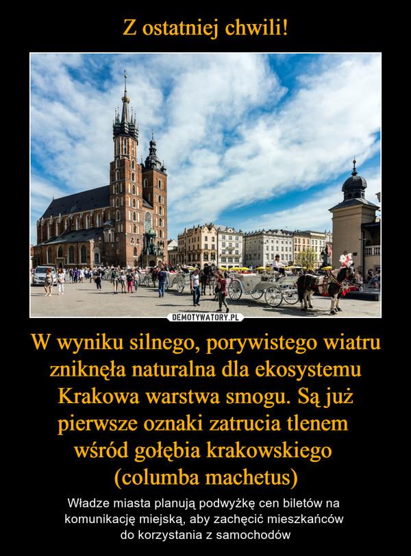 W wyniku silnego, porywistego wiatru zniknęła naturalna dla ekosystemu Krakowa warstwa smogu. Są już pierwsze oznaki zatrucia tlenem wśród gołębia krakowskiego (columba machetus) – Władze miasta planują podwyżkę cen biletów na komunikację miejską, aby zachęcić mieszkańców do korzystania z samochodów