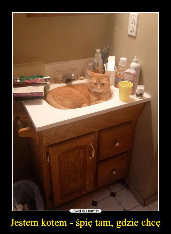 Jestem kotem - śpię tam, gdzie chcę –