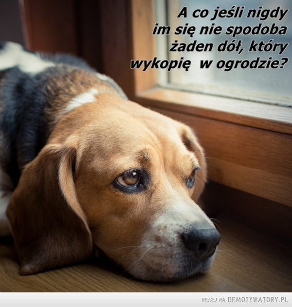 Rozmyślania psa –  A co jeśli nigdy im się nie spodoba żaden dól, który wykopię w ogrodzie?
