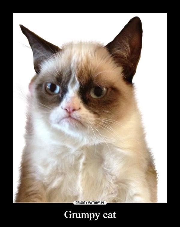 Grumpy cat –