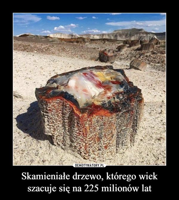 Skamieniałe drzewo, którego wiek szacuje się na 225 milionów lat –