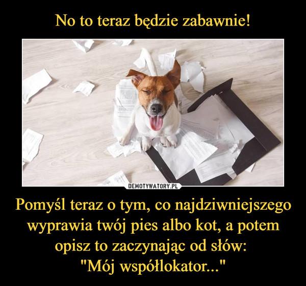 """Pomyśl teraz o tym, co najdziwniejszego wyprawia twój pies albo kot, a potem opisz to zaczynając od słów: """"Mój współlokator..."""" –  No to teraz będzie zabawnie"""