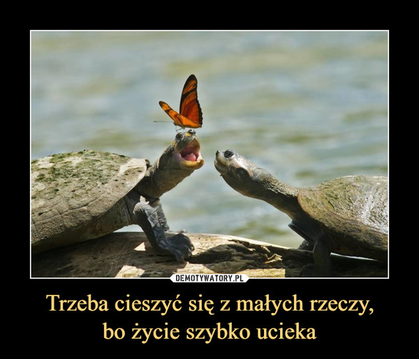 Trzeba cieszyć się z małych rzeczy,bo życie szybko ucieka –