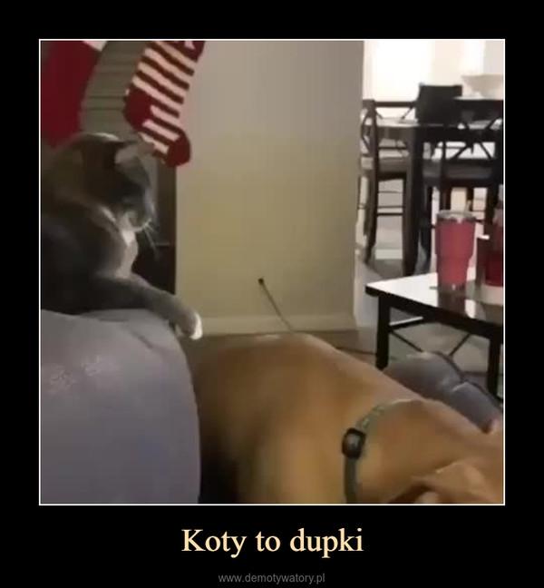 Koty to dupki –