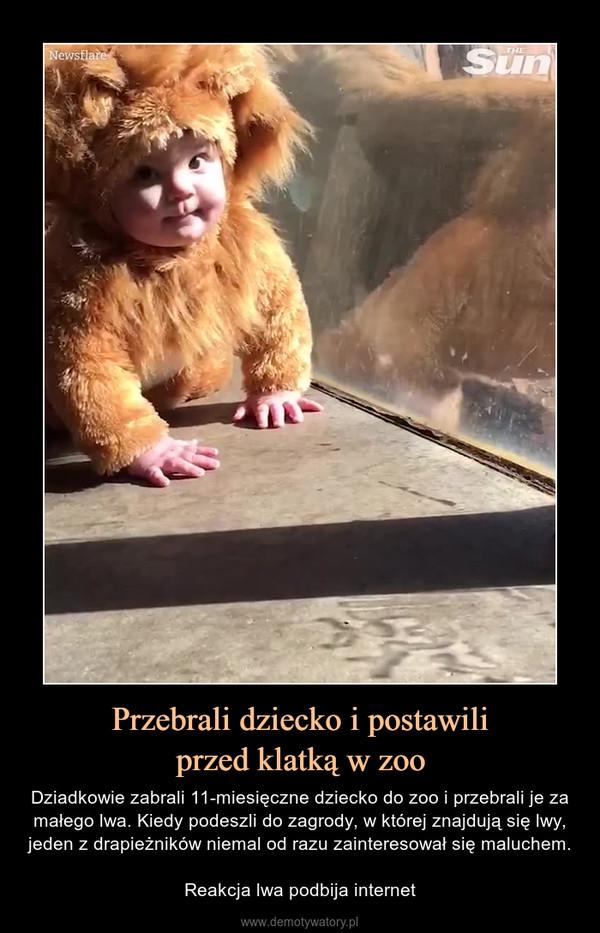 Przebrali dziecko i postawiliprzed klatką w zoo – Dziadkowie zabrali 11-miesięczne dziecko do zoo i przebrali je za małego lwa. Kiedy podeszli do zagrody, w której znajdują się lwy, jeden z drapieżników niemal od razu zainteresował się maluchem.Reakcja lwa podbija internet
