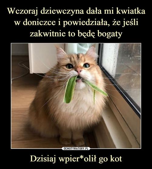 Wczoraj dziewczyna dała mi kwiatka w doniczce i powiedziała, że jeśli zakwitnie to będę bogaty Dzisiaj wpier*olił go kot