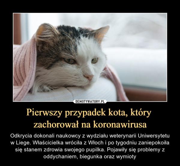 Pierwszy przypadek kota, który zachorował na koronawirusa – Odkrycia dokonali naukowcy z wydziału weterynarii Uniwersytetu w Liege. Właścicielka wróciła z Włoch i po tygodniu zaniepokoiła się stanem zdrowia swojego pupilka. Pojawiły się problemy z oddychaniem, biegunka oraz wymioty