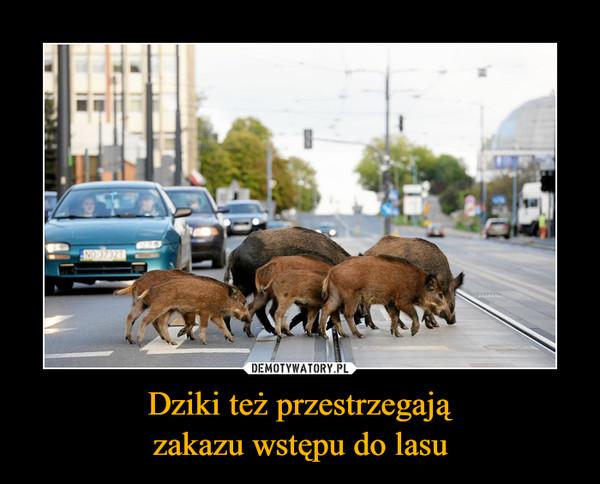 Dziki też przestrzegajązakazu wstępu do lasu –