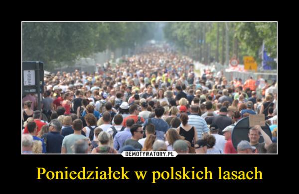 Poniedziałek w polskich lasach –