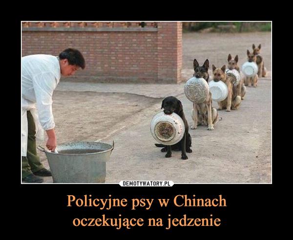 Policyjne psy w Chinachoczekujące na jedzenie –