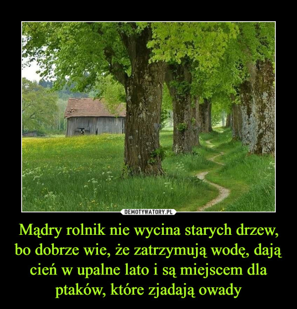 Mądry rolnik nie wycina starych drzew, bo dobrze wie, że zatrzymują wodę, dają cień w upalne lato i są miejscem dla ptaków, które zjadają owady –