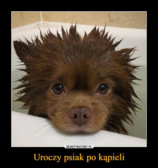 Uroczy psiak po kąpieli –