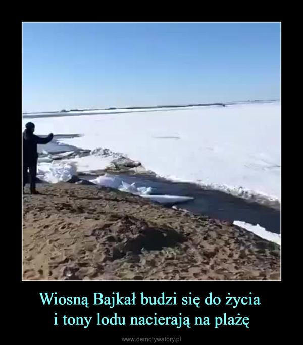 Wiosną Bajkał budzi się do życia i tony lodu nacierają na plażę –