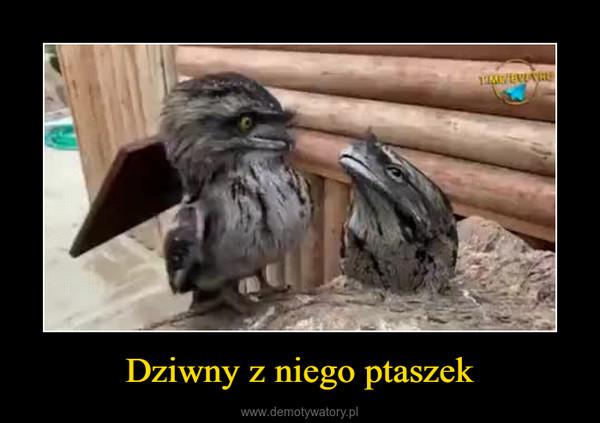 Dziwny z niego ptaszek –