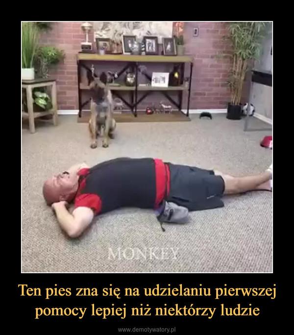 Ten pies zna się na udzielaniu pierwszej pomocy lepiej niż niektórzy ludzie –