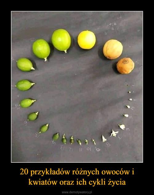 20 przykładów różnych owoców i kwiatów oraz ich cykli życia