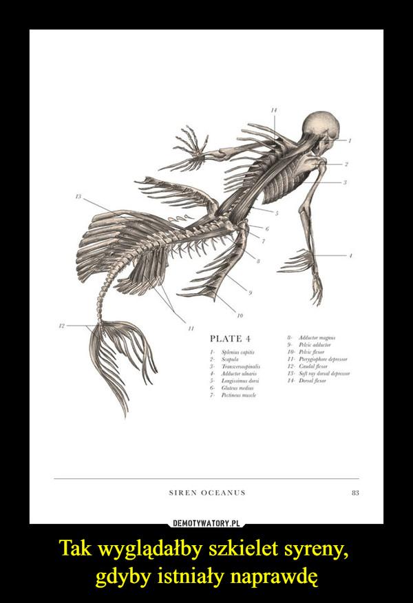 Tak wyglądałby szkielet syreny, gdyby istniały naprawdę –