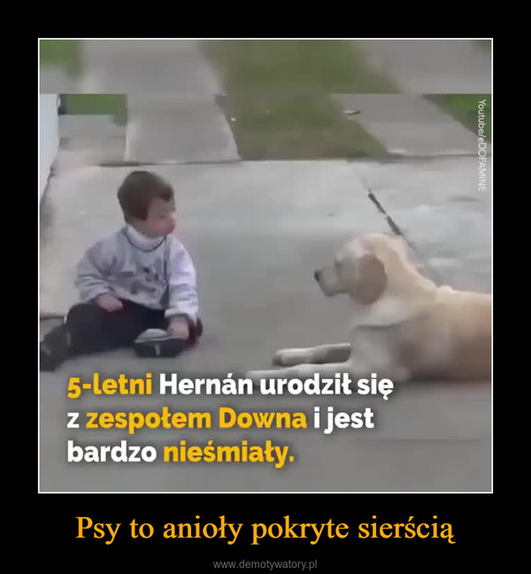 Psy to anioły pokryte sierścią –