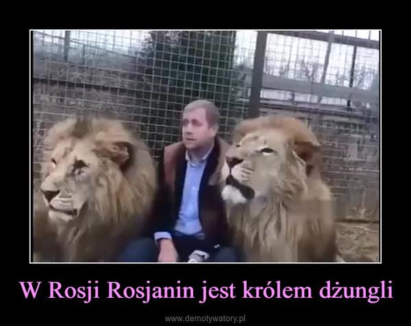 W Rosji Rosjanin jest królem dżungli –
