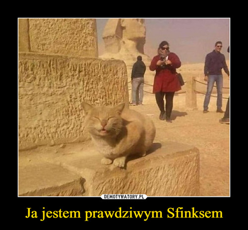 Ja jestem prawdziwym Sfinksem