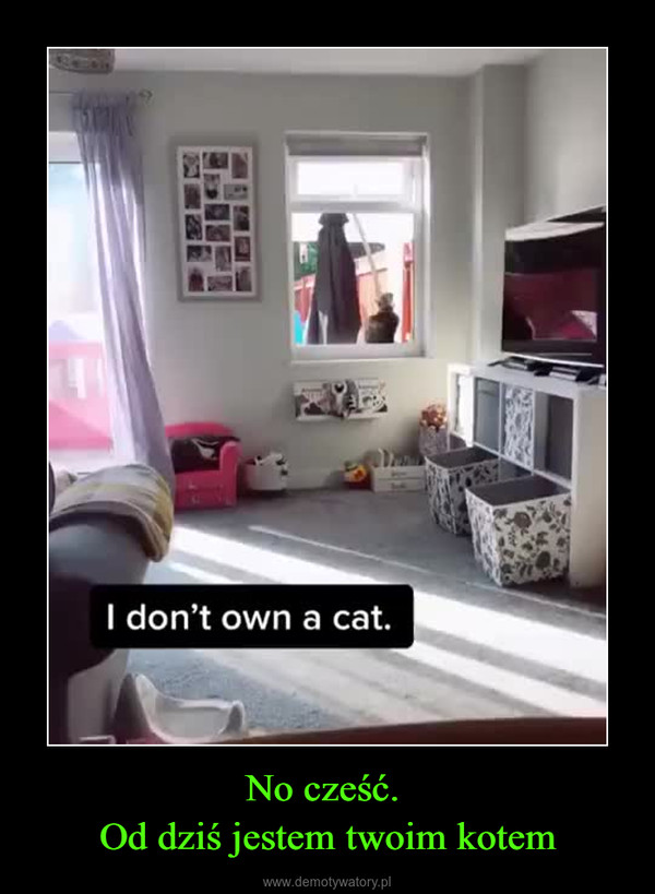 No cześć. Od dziś jestem twoim kotem –