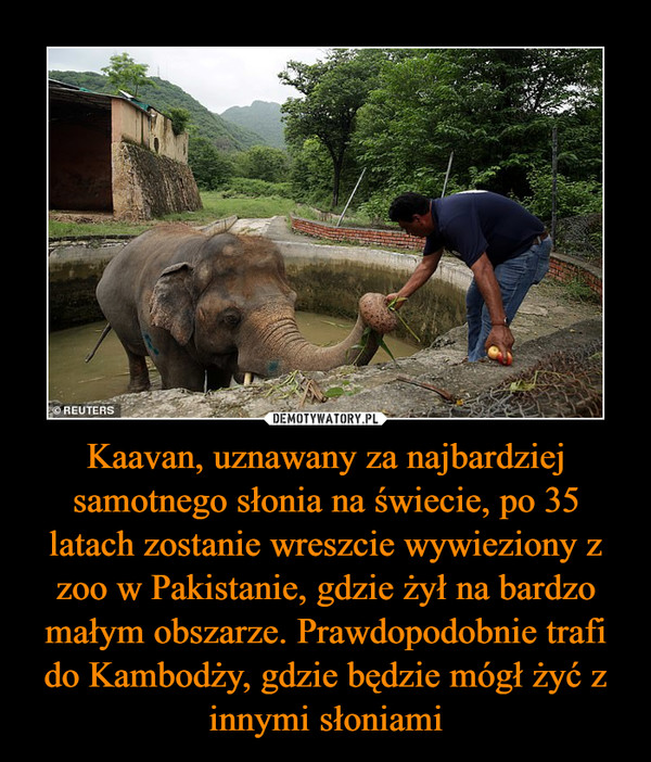 Kaavan, uznawany za najbardziej samotnego słonia na świecie, po 35 latach zostanie wreszcie wywieziony z zoo w Pakistanie, gdzie żył na bardzo małym obszarze. Prawdopodobnie trafi do Kambodży, gdzie będzie mógł żyć z innymi słoniami –