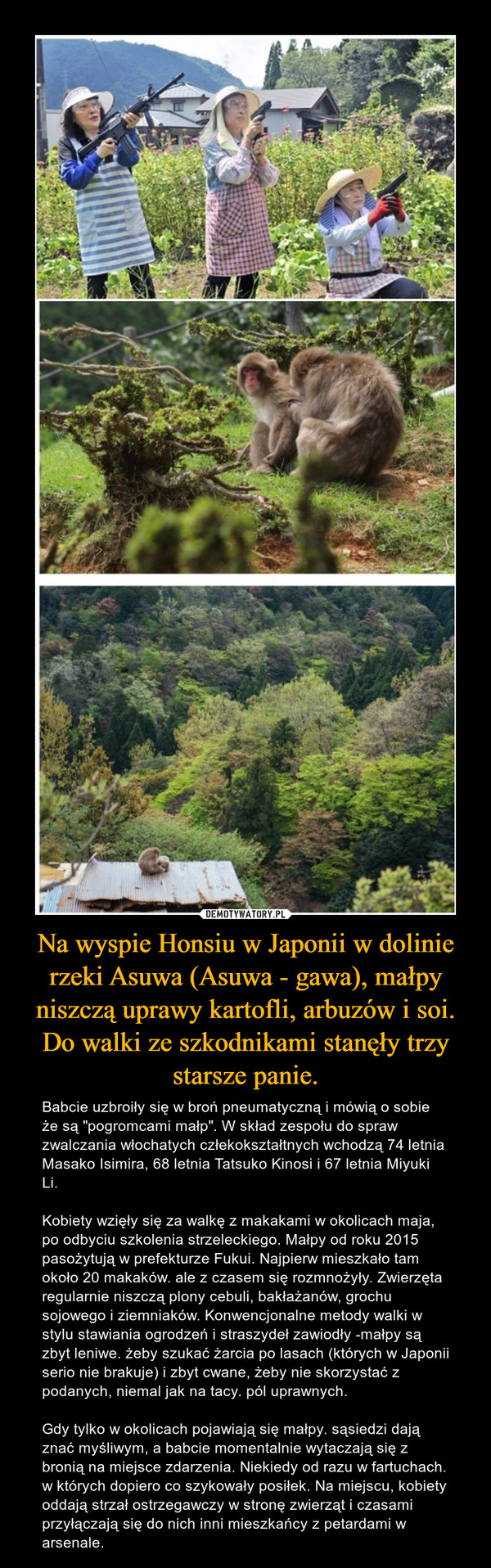 """Na wyspie Honsiu w Japonii w dolinie rzeki Asuwa (Asuwa - gawa), małpy niszczą uprawy kartofli, arbuzów i soi. Do walki ze szkodnikami stanęły trzy starsze panie. – Babcie uzbroiły się w broń pneumatyczną i mówią o sobie że są """"pogromcami małp"""". W skład zespołu do spraw zwalczania włochatych człekokształtnych wchodzą 74 letnia Masako Isimira, 68 letnia Tatsuko Kinosi i 67 letnia Miyuki Li. Kobiety wzięły się za walkę z makakami w okolicach maja, po odbyciu szkolenia strzeleckiego. Małpy od roku 2015 pasożytują w prefekturze Fukui. Najpierw mieszkało tam około 20 makaków. ale z czasem się rozmnożyły. Zwierzęta regularnie niszczą plony cebuli, bakłażanów, grochu sojowego i ziemniaków. Konwencjonalne metody walki w stylu stawiania ogrodzeń i straszydeł zawiodły -małpy są zbyt leniwe. żeby szukać żarcia po lasach (których w Japonii serio nie brakuje) i zbyt cwane, żeby nie skorzystać z podanych, niemal jak na tacy. pól uprawnych. Gdy tylko w okolicach pojawiają się małpy. sąsiedzi dają znać myśliwym, a babcie momentalnie wytaczają się z bronią na miejsce zdarzenia. Niekiedy od razu w fartuchach. w których dopiero co szykowały posiłek. Na miejscu, kobiety oddają strzał ostrzegawczy w stronę zwierząt i czasami przyłączają się do nich inni mieszkańcy z petardami w arsenale."""