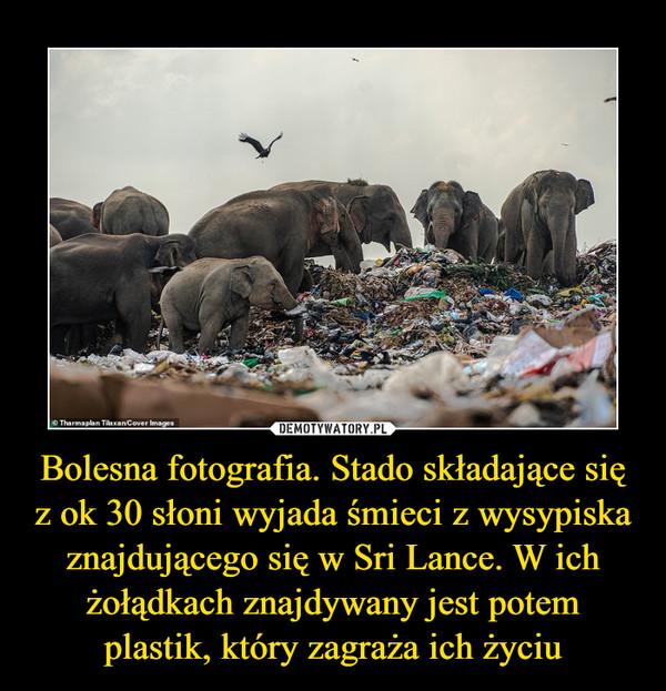 Bolesna fotografia. Stado składające się z ok 30 słoni wyjada śmieci z wysypiska znajdującego się w Sri Lance. W ich żołądkach znajdywany jest potem plastik, który zagraża ich życiu –